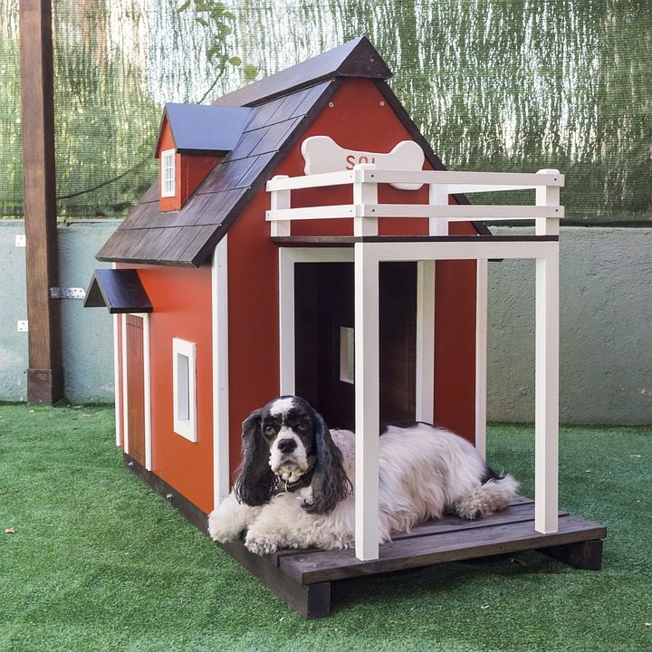 Why Dog Kennel Better Than a Dog House - Post Thumbnail
